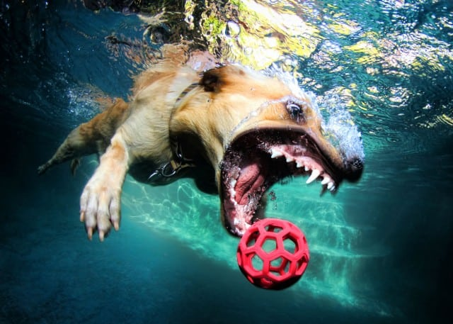 Seth Casteel Underwater Dog 006