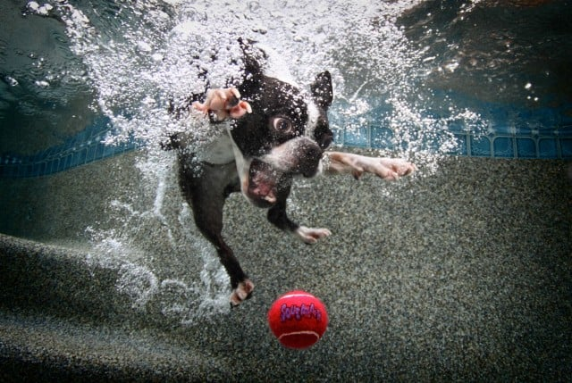 Seth Casteel Underwater Dog 007