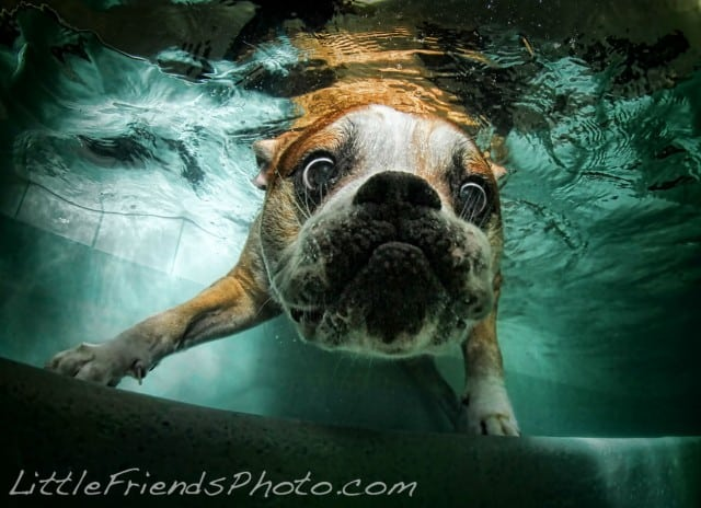 Seth Casteel Underwater Dog 008