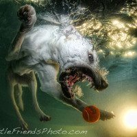Seth Casteel Underwater Dog 009