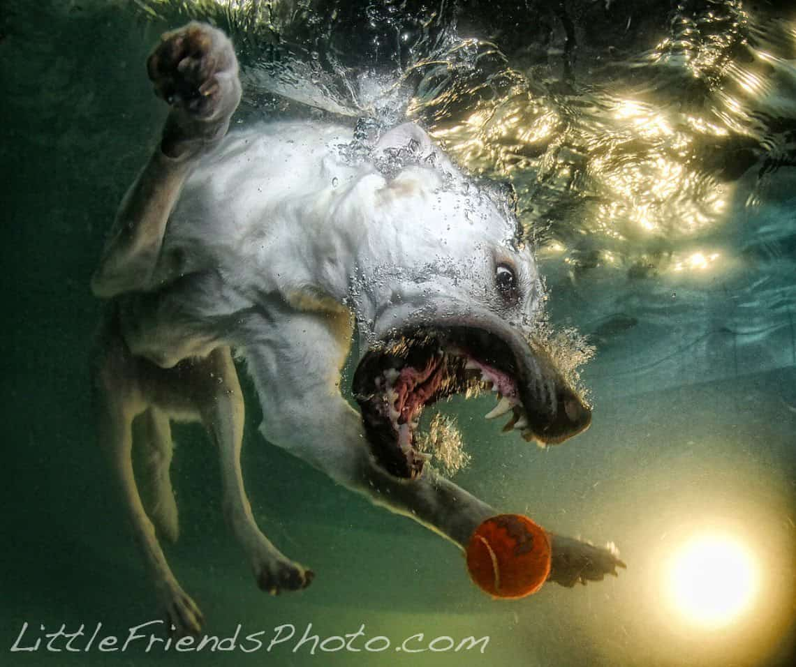Stunning Dog Photography #49: Seth Casteel's Underwater Dogs
