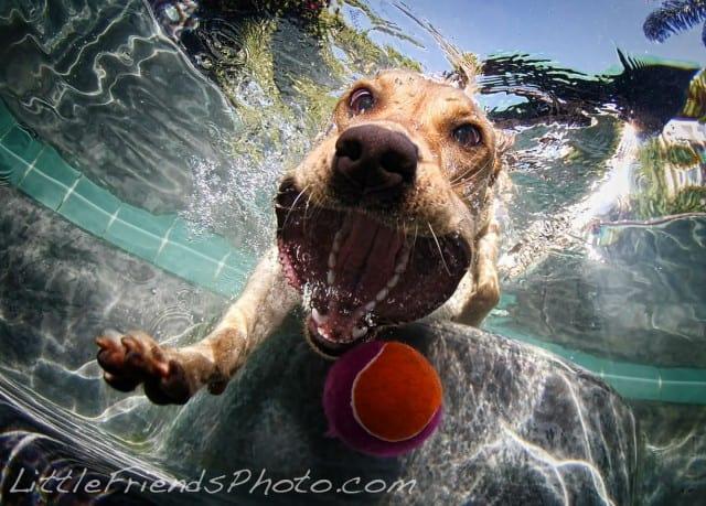 Seth Casteel Underwater Dog 012