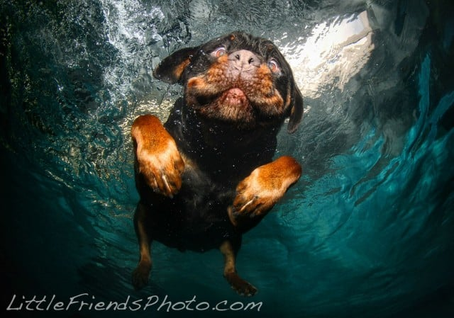 Seth Casteel Underwater Dog 013