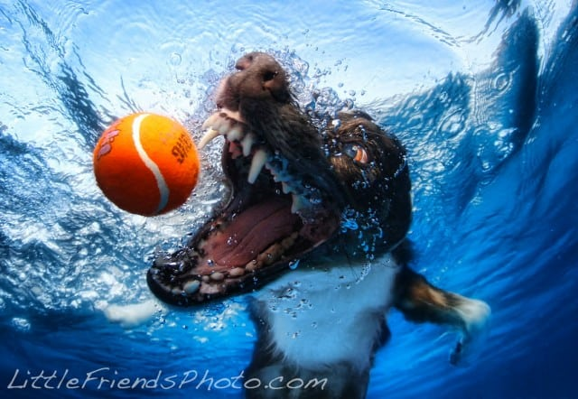 Seth Casteel Underwater Dog 014