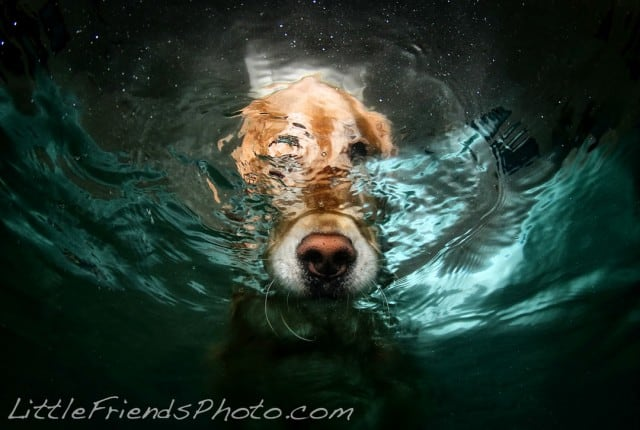 Seth Casteel Underwater Dog 015