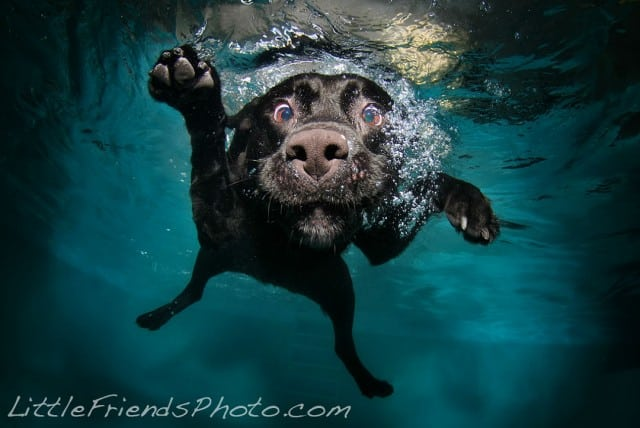 Seth Casteel Underwater Dog 016