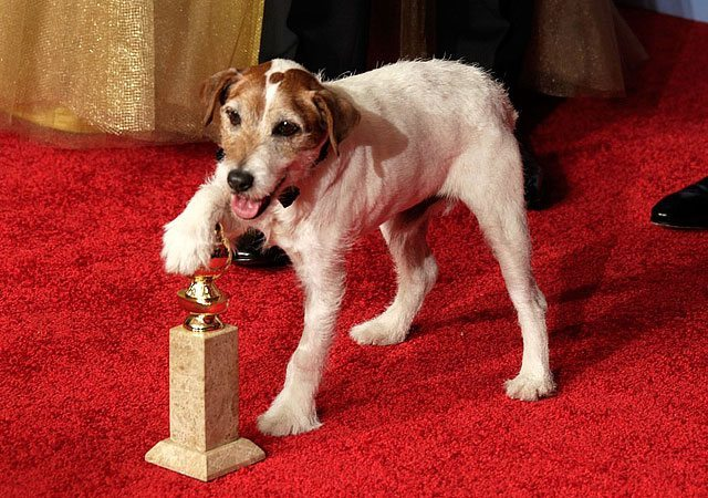 Oscar Nominated Film 'The Artist' Sparks Craze For Jack Russell Dogs