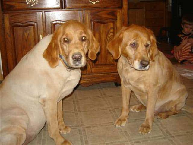 Two Dogs Is Too Many In Wisconsin Town