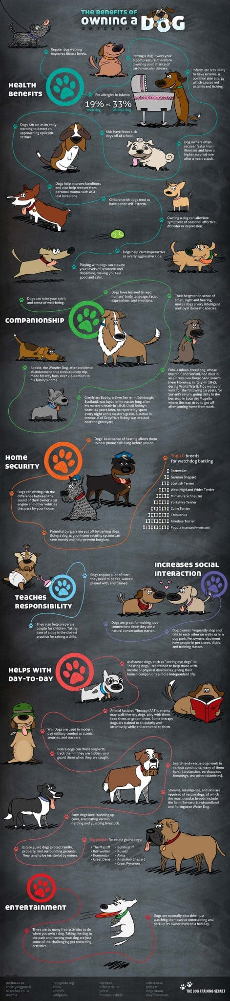 Benefits Of Owning A Dog: Infographic