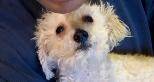 Blind Dog Fiona