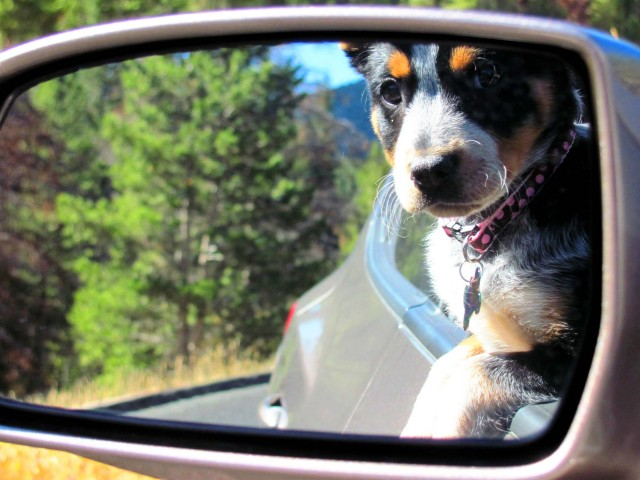 Photo of Cleo by Megan Harris of Cheyenne, Wyoming.