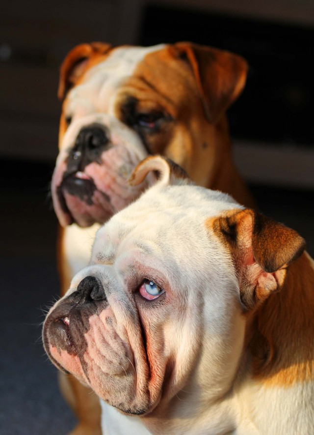 Photo od Myko & Oliver by Loes Meerbeek of the Netherlands.
