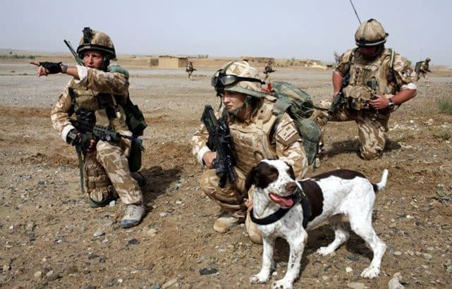 UK Government Kills Over 800 Army Dogs After Faithful Service
