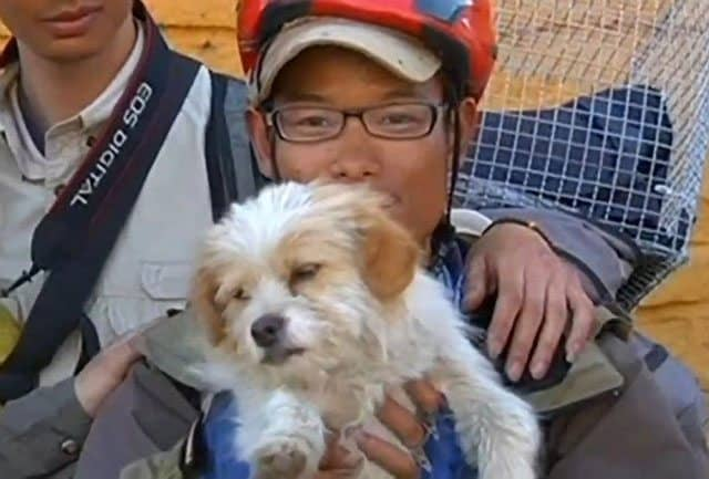 Stray Dog Completes 1700 Km Race In China