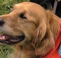 Hero Dogs Of 9/11: Legacy