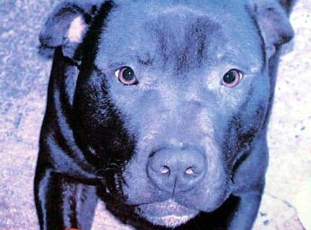 EVIL EXISTS! The Butchers Of Belfast Murder Lennox