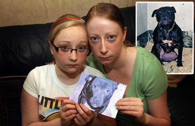 Family Sadly Declares The Fight To Save Their Dog Lennox Is Over