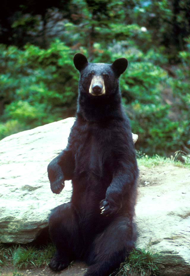 man dogs black bears .