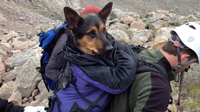 UPDATED: Hiker Who Abandoned Dog on Mountain Wants Her Back