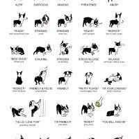 Doggie Language Poster by Lili Chen.