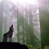 Wisconsin Called Cruel For Allowing Dogs To Track Wolves