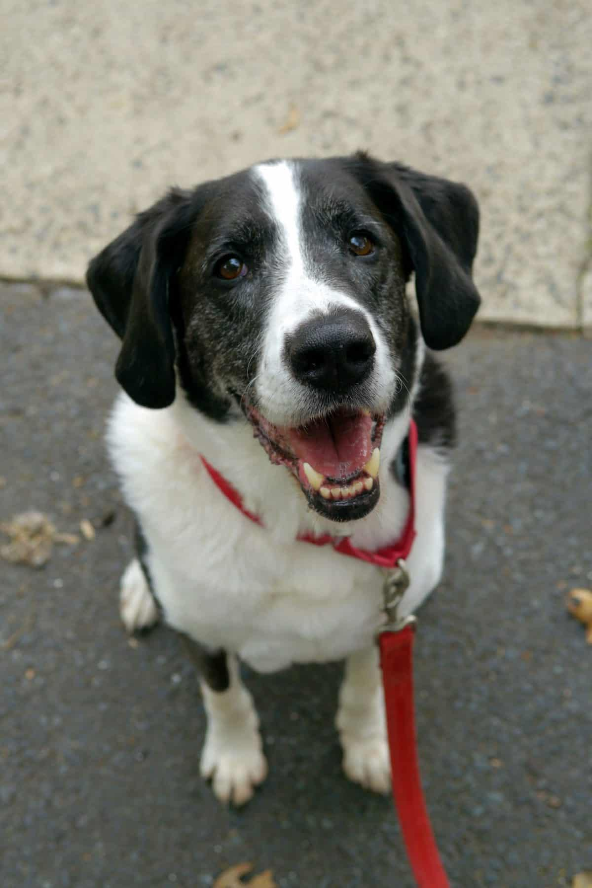 Dog Files Mascot, Max Celebrates His 11th Birthday!