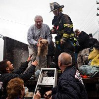 Rescuers in New York City rescue animals as well as humans.