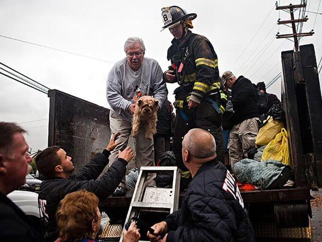 Animal Rescue In The Aftermath Of Hurricane Sandy