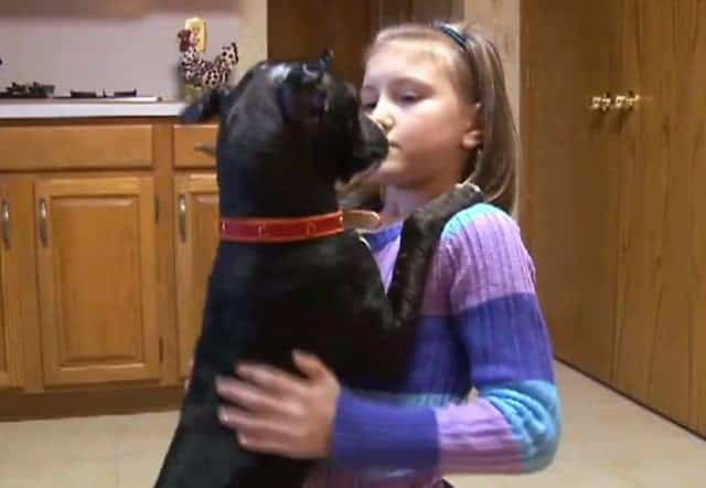 Pit Bull Mix Used As Dogfighting Bait Dog Flourishes With New Jersey Family: Heartwarming Video