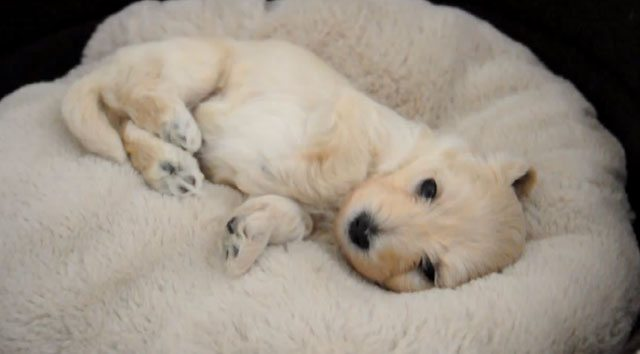 Happy Wake Up From Cutest Pup In The World: Cute Video
