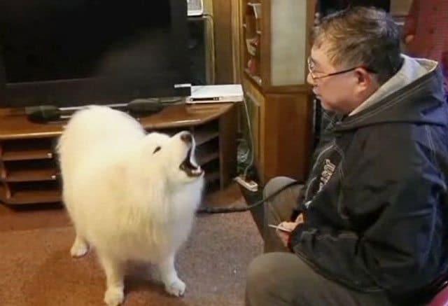 Meet Potato The Math Whiz Dog From China