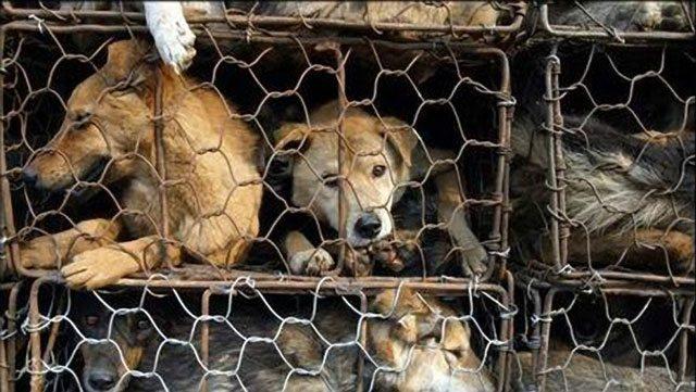 PETA Victorious In Pressuring Bebe To Stop Using Fur