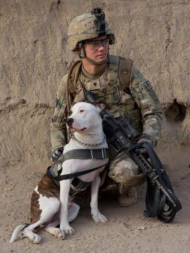 Military dog airborne - photo#25