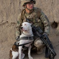 U.S. Army Tactical Explosive Detector Dogs