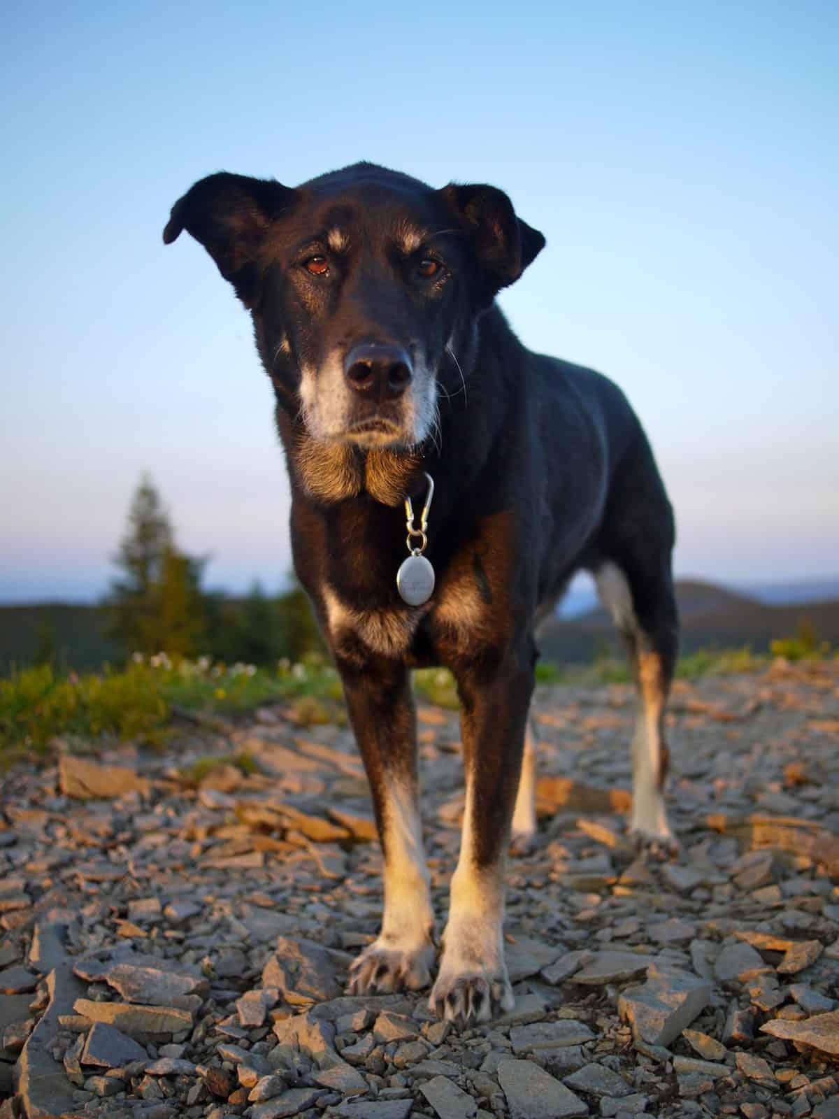 Stunning Dog Photography #52: Dog Files Community #14