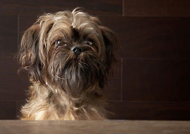 Groomer's Carelessness Claims Dog's Life: A Cautionary Tale