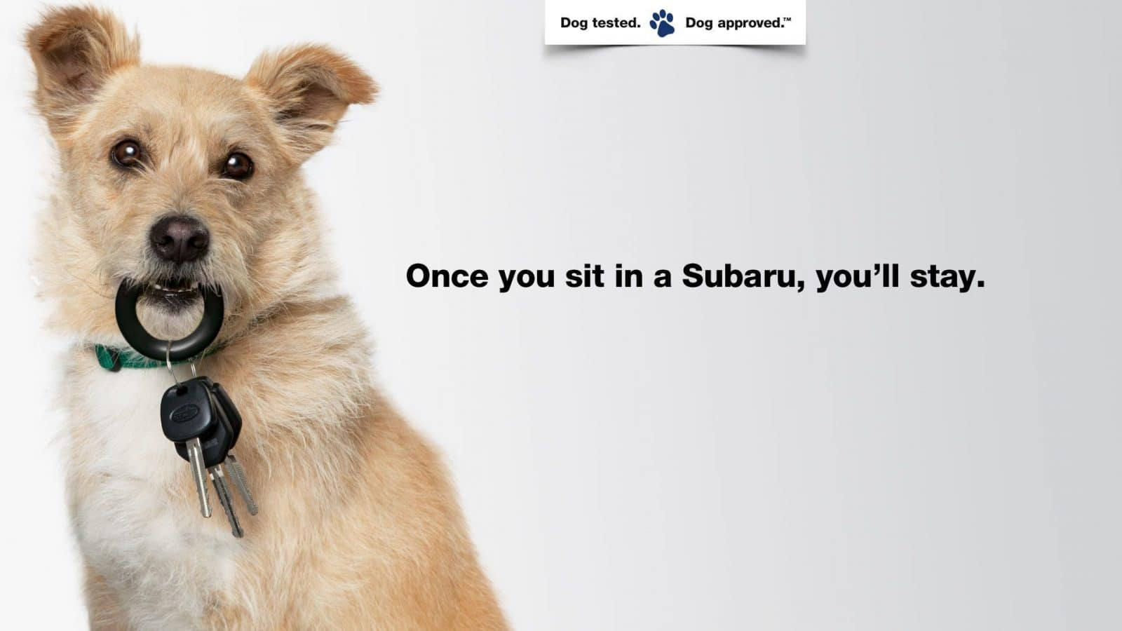 Don't Forget To Download The Subaru App For The Puppy Bowl