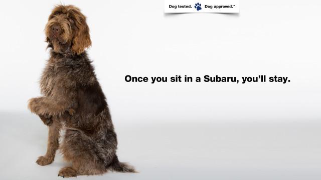 SubaruDogTested_Sit