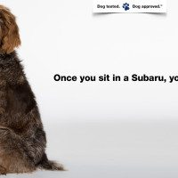 If You Watch The Puppy Bowl On Sunday Make Sure To Download The Subaru App
