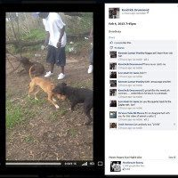 Facebook Post Initiates Felony Charges For Dogfighting
