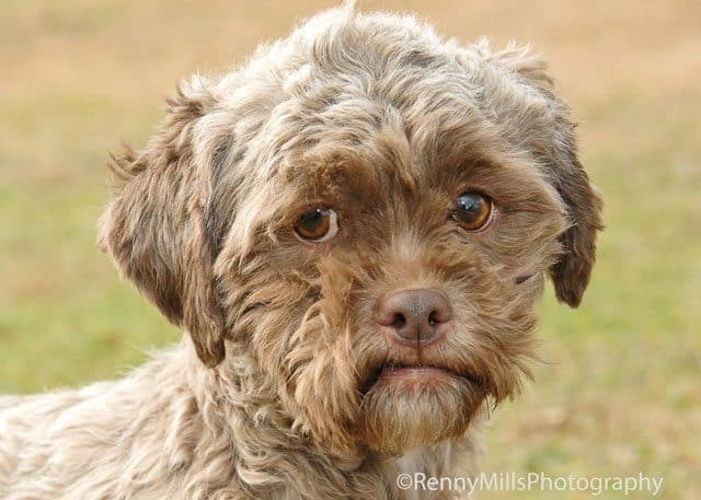 Dog With Human-Like Face Up For Adoption