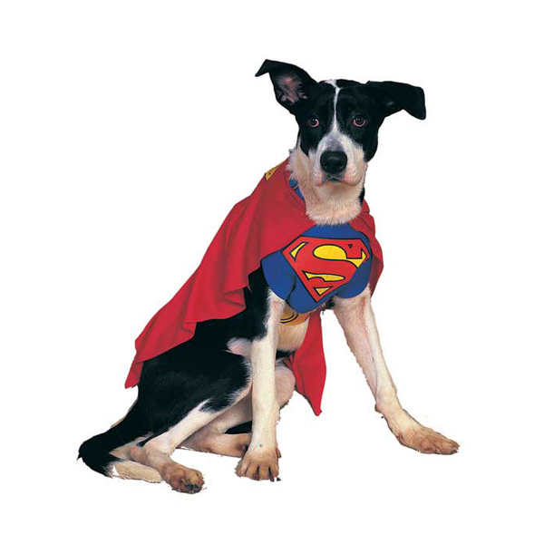 superman-dog-halloween-costume-1 (1)