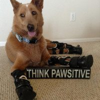 Naki'o The Bionic Dog Pawsitive Spokesdog For DisABLED Pets