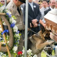 Police Dog Offers Solemn Farewell To Fallen Partner