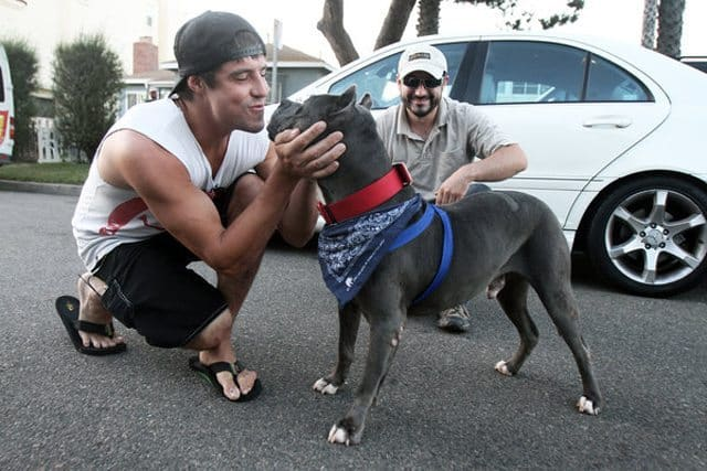 Lost Pitbull Reunited With Owner After Three Years, From Across The USA