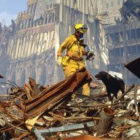 Dog Files Opinion: What The Hero Dogs Of 9/11 TV Special Means To Me