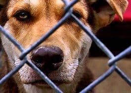 Banner-Box-4-Dog-Adopt