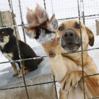 Romanian Stray Dogs Issued Death Sentence After Boy Dies