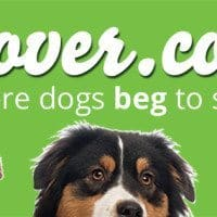 Looking For A Doggysitter You Can Trust? Me too!