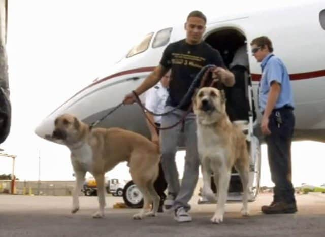 Marine's Rescued Dogs Denied Flights, Wrigley Heiress Charters Private Jet